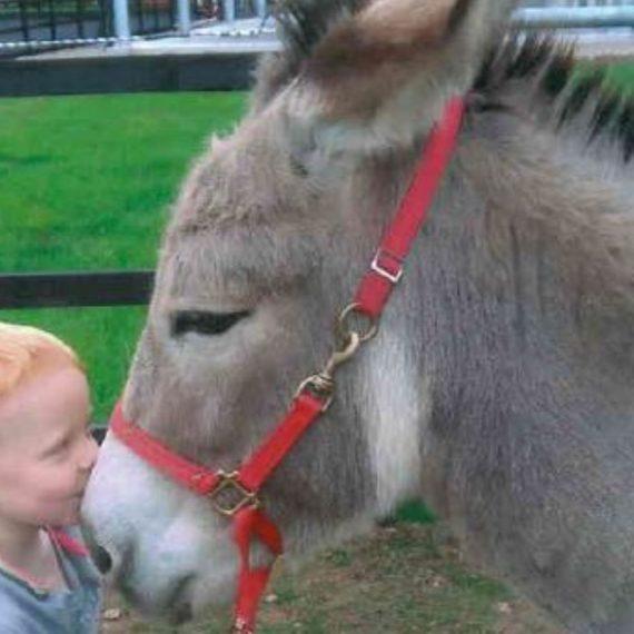 Sponsor a Donkey